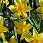 Spring Breaks Grantown on Spey